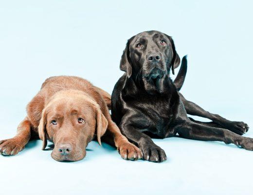pet insurance canada