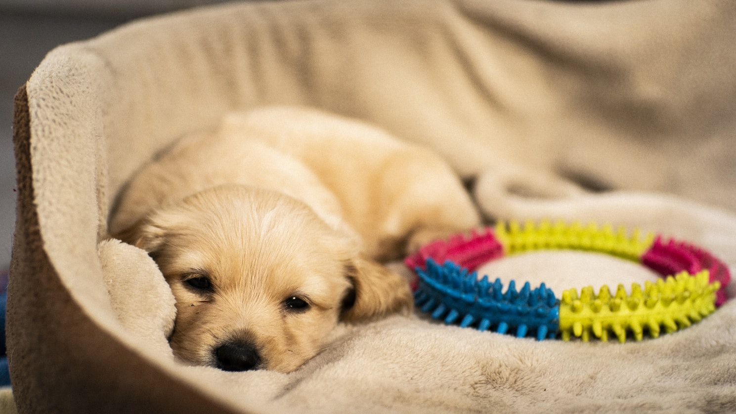 Best Dog Beds In Canada