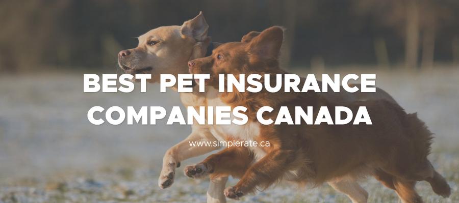 best pet insurance companies canada