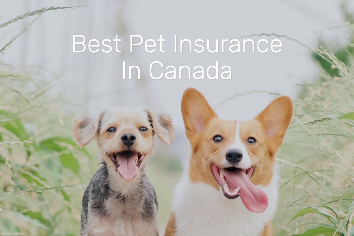 best pet insurance canada